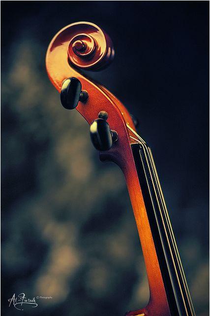 Chelo, bass, violin, viola?