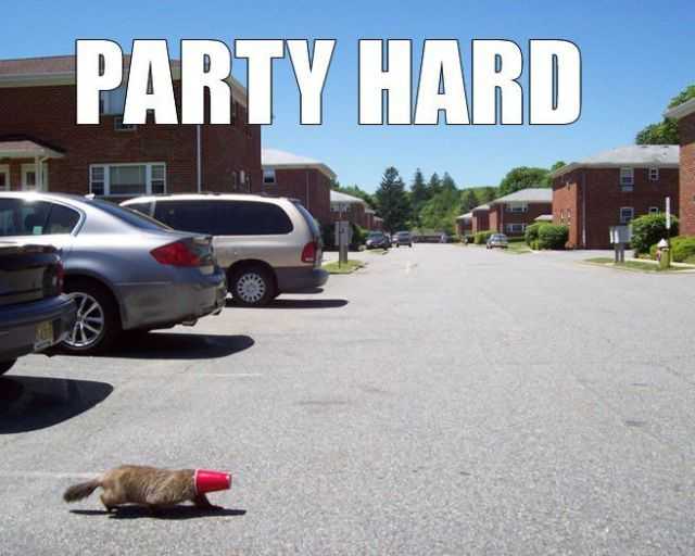 Yup. That's a beaver with a red solo cup stuck on it's head.  What happens in Canada stays in Canada...