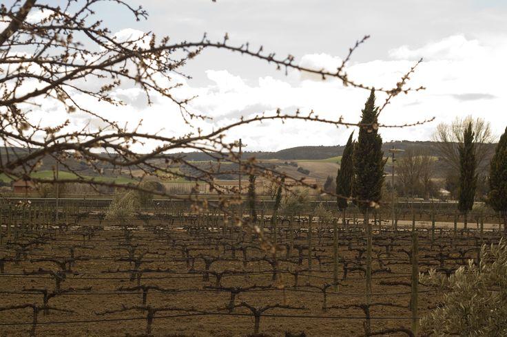 Disfruta de las vistas de nuestro jardín de variedades mientras comes en el Restaurante La Espadaña, en la Ribera del Duero.