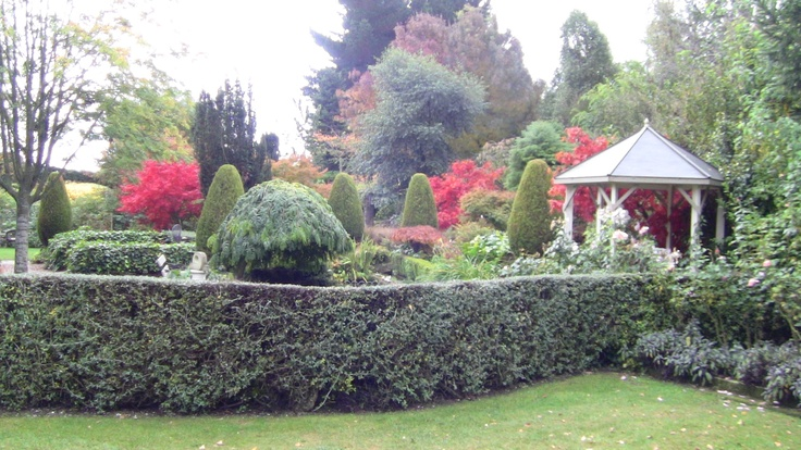 The curved teucruim hedge works well in front of the pond area.