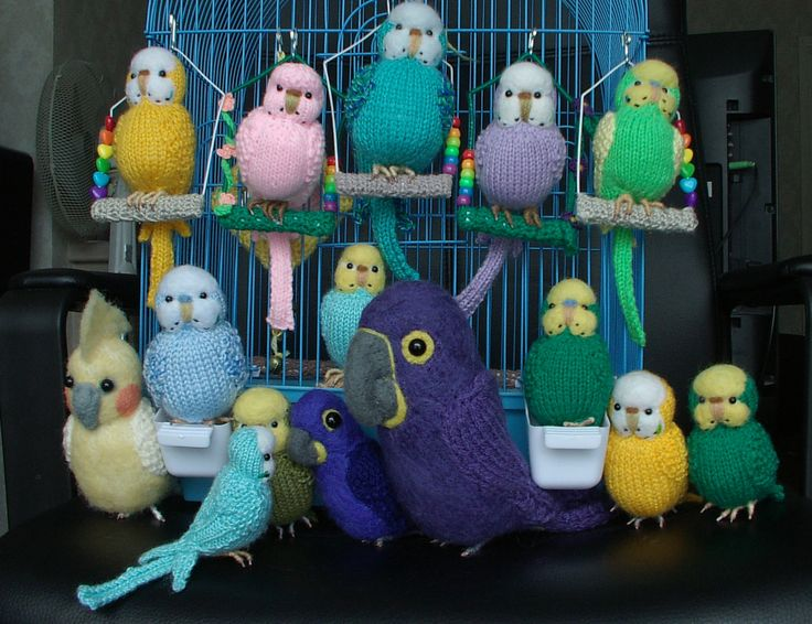 146 Best Knitted Budgies By Carol Harrison Images On Pinterest