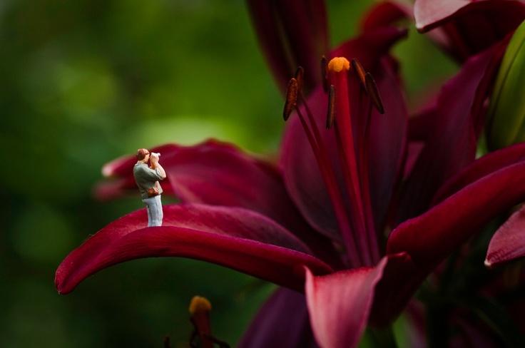 Un Petit Monde Garden Variety Series