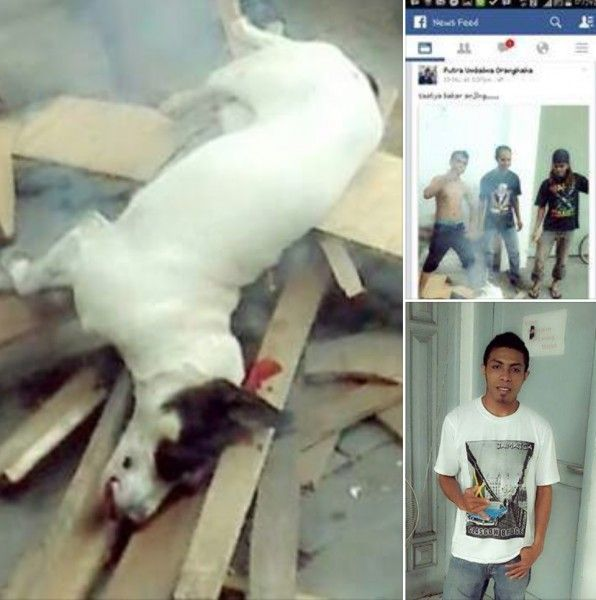 Indonesian men barbecue dog because they were bored, boast with pics on Facebook! Demand justice! Animal Petitions by YouSignAnimals.org. Sign the Petition here: http://www.yousignanimals.org/Indonesian-men-barbecue-dog-because-they-were-bored-boast-with-pics-on-Facebook-Demand-justice-t-964 If these people think they can put down a dog like that and get away unpunished, let's all prove them they are so wrong! These...