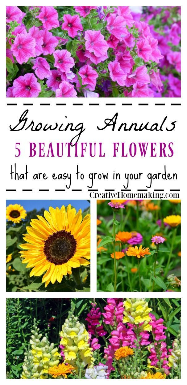 Annuals 5 Easy To Grow Flowers Easy To Grow Flowers Annual