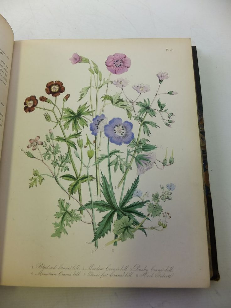 Photo of BRITISH WILD FLOWERS illustrated by Loudon, Jane published by William Smith (STOCK CODE: 1808982) for sale by Stella & Rose's Books