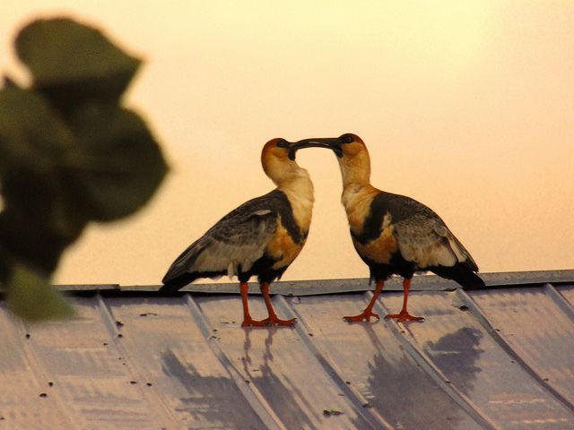 Love   Flickr - Photo Sharing!