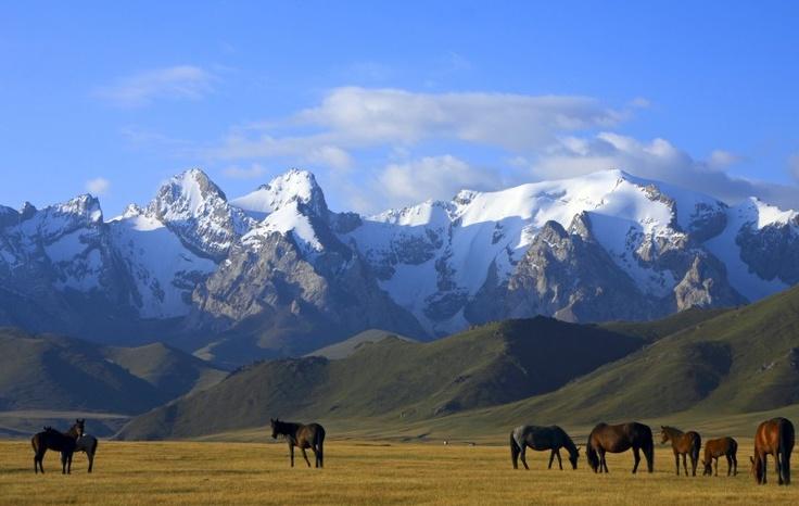 # Kirghizistan : Chevaux devant les Monts Célestes (Tian Shan).