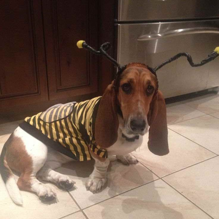 Basset Hound Costumes For Sale In 2020 Basset Hound Basset Basset Hound Dog