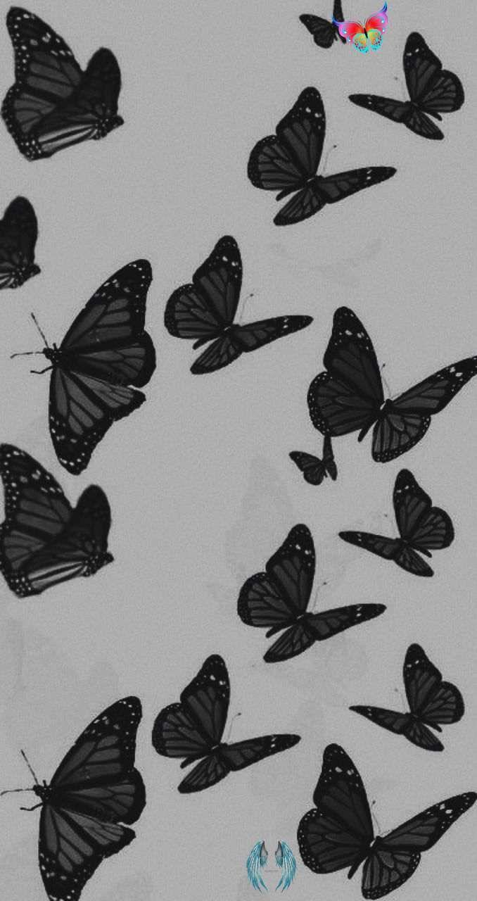 Black Aesthetic Butterflies Try This Butterfly Wallpaper For Iphone With Summer Vintage Background D Fond D Ecran Colore Fond D Ecran Dessin Fond D Ecran Gris