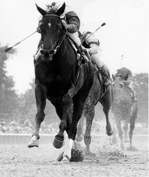 Ruffian (April 17, 1972–July 7, 1975) was an American champion. Ruffian is considered by many to be the greatest female racehorse in history and was ranked among the top U.S. racehorses of the 20th century by Blood-Horse magazine. I love this pic
