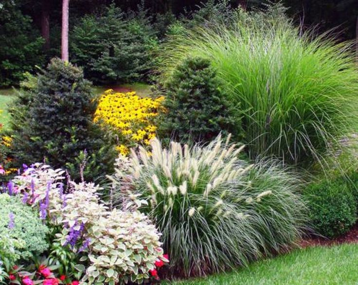42 Amazing Evergreen Grasses Landscaping Ideas