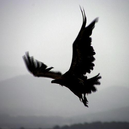 Vulture dance (by Hat'Man)