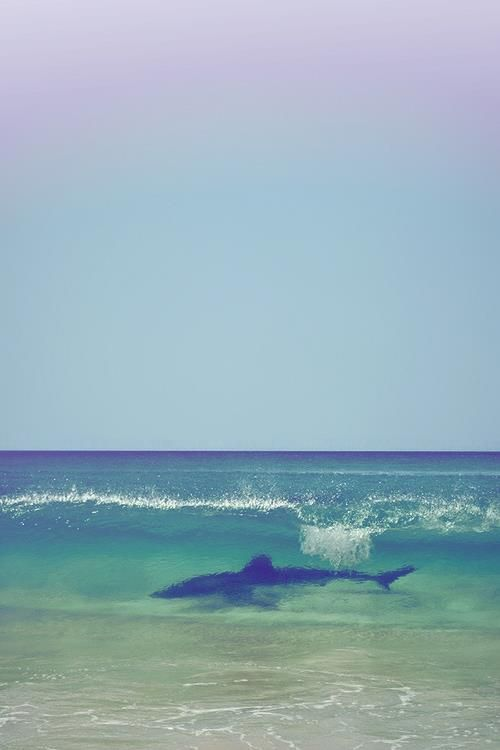 Surfin' Safari  http://i-care-because-u-steal.tumblr.comWater, Sharks Weeks, The Ocean, Capes Town, South Africa, At The Beach, The Waves, Animal, The Sea