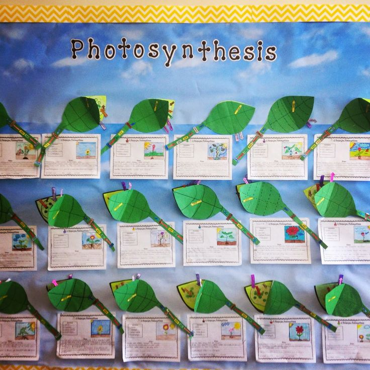 Photosynthesis Craftivity-  Students visually show the process of photosynthesis and explain it as a recipe! Great Science Bulletin board! Perfect for upper grade science.
