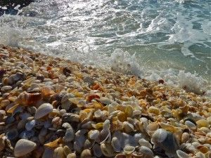 Captiva Island, FL - one of the best shelling beaches