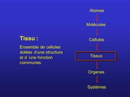 Atomes Molécules Cellules Tissus Organes Systèmes Tissu : Ensemble de cellules dotées d'une structure et d 'une fonction communes.