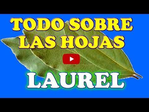 PON LAUREL EN TUS ZAPATOS SUERTE Y ÉXITO TENDRAS - AYUDA ESPIRITUAL - HECHIZOS PRÁCTICOS - YouTube