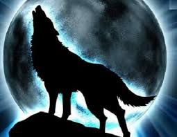 113 best LOBOS images on Pinterest  Drawings Animals and Werewolves