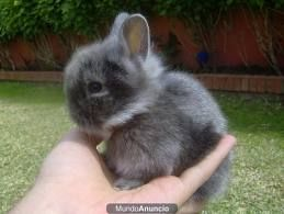 conejo enano - Buscar con Google
