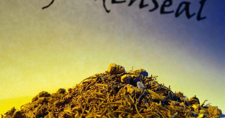 Como comprar mudas e sementes de hidraste. O hidraste, cujo nome científico é Hydrastis canadensis, é uma erva perene também conhecida como cânhamo-do-Canadá e raiz amarela. É uma planta de baixo crescimento com pequenas flores brancas e verdes que florescem no inicio da primavera e, depois, produzem pequenas bagas vermelhas. A planta cresce e se espalha por meio de rizomas subterrâneos, ...