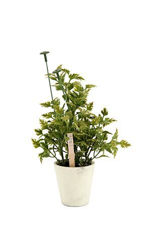 """Give your kitchen a fresh welcoming touch with this mint herbs in paper pot. It maintains its bright colour all year round and the best part no watering required.<div class=""""pdpDescContent""""><BR /><b class=""""pdpDesc"""">Dimensions:</b><BR />L9.5xW9.5xH27.5 cm</div>"""
