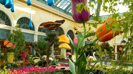 Bellagio Conservatory - Bellagio Conservatory Las Vegas - Vegas Attractions   VEGAS.com