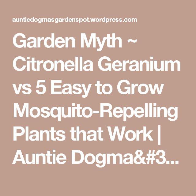 Garden Myth ~ Citronella Geranium  vs 5 Easy to Grow Mosquito-Repelling Plants that Work | Auntie Dogma's Garden Spot