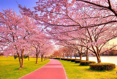 Japan - Sakura (Chloe's middle name)  Cherry blossom, breathtaking