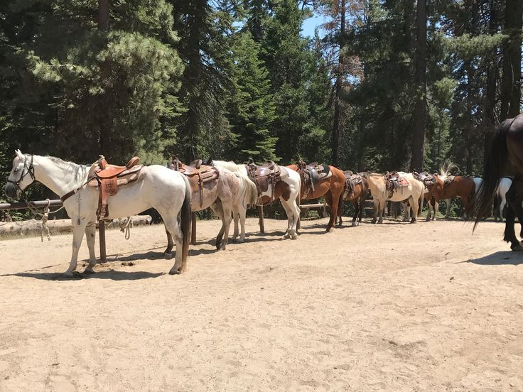 to Grant Grove Stables in 2020 Kings canyon