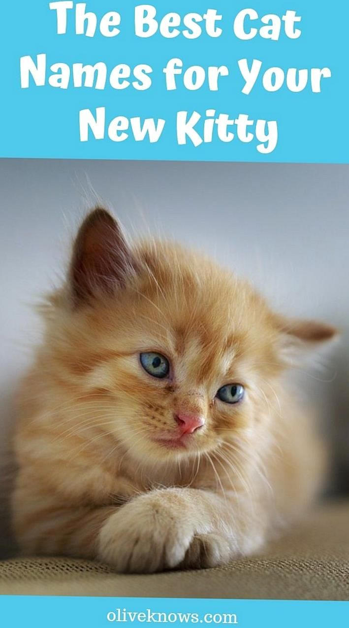 You Have Gotten Yourself A Kitty And You Dont Know How To Name It Check Out The Best Cat Names For Your New Kitt In 2020 Cat Names Kitten Names Unique