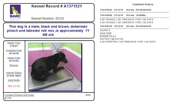 Houston TX: BARC. Poor dog is scared so may be labeled aggressive. Needs patient and compassionate person.