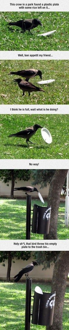 Welp, that crow is better to the environment than SOME people i can think of