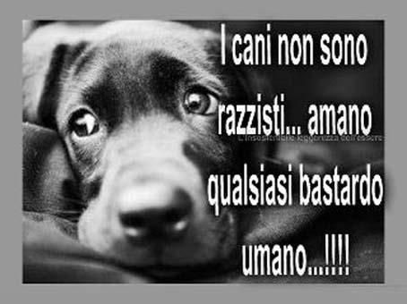 i cani...