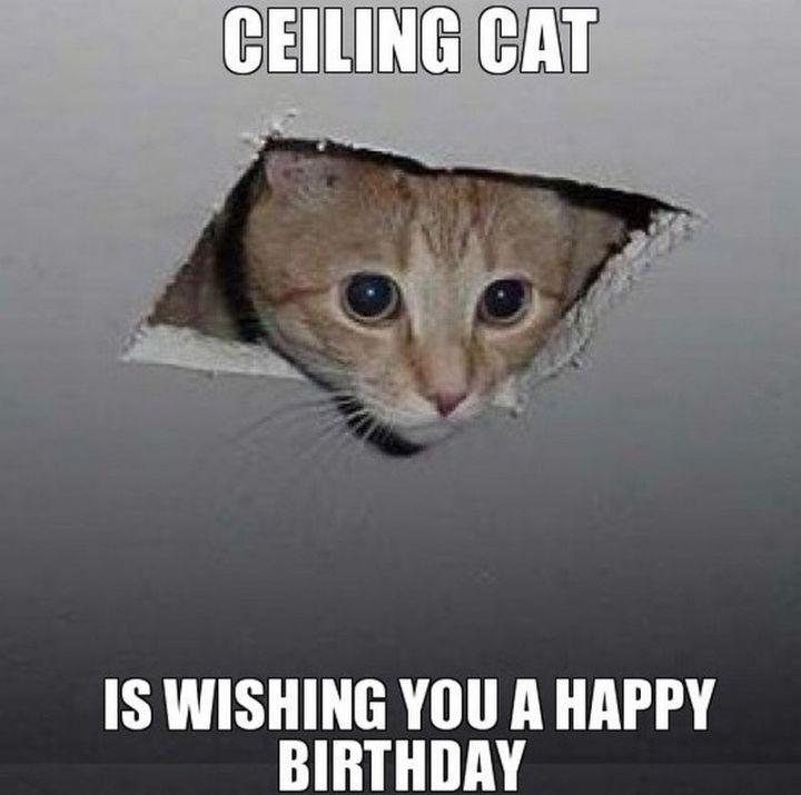 101 Funny Cat Birthday Memes For The Feline Lovers In Your Life Cat Birthday Memes Cat Birthday Funny Happy Birthday Meme