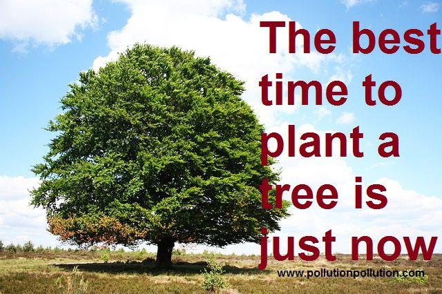 25 catchy slogans on tree plantation