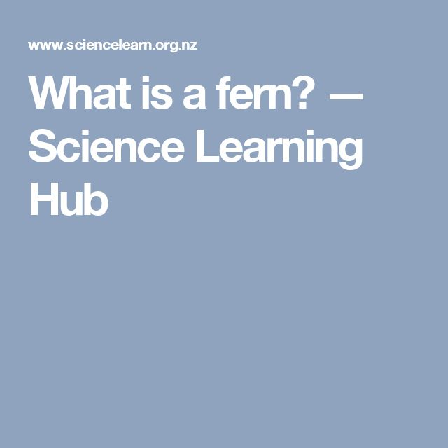 What is a fern? — Science Learning Hub