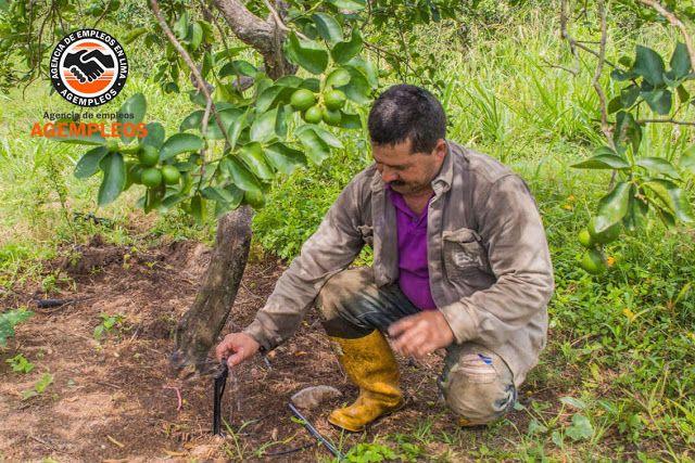 Agencia de empleos en Lima: SUPERVISOR ACOPIO MATERIAS PRIMAS FRUTAS HORTALIZA...