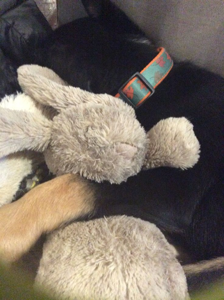 Our newest member Theo cuddling his bunny as he sleeps