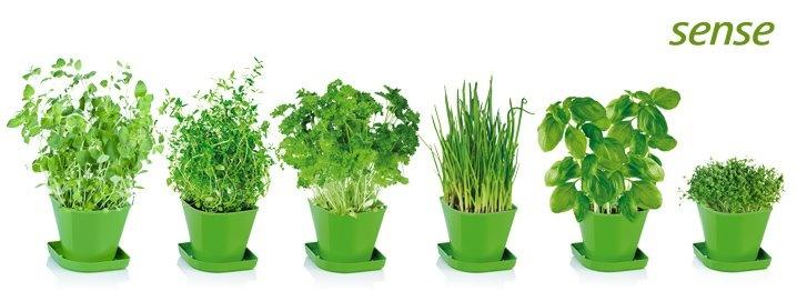 Súprava Sense pre pestovanie čerstvých byliniek v domácnosti. Obsahuje semená tymiánu, žeruchy, bazalky, pamajoránu, petržlenu a pažítky, ďalej pôdne substráty v bio kvalite a 6 kvetináčov z odolného plastu.