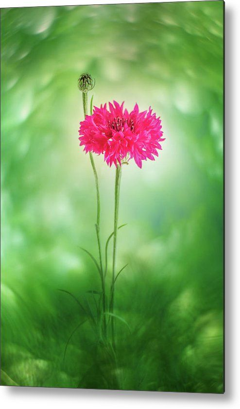 Larysa Koryakina Fine Art Photodraphy. Metal Print featuring the photograph In Green Shine by Larysa Koryakina. Available in many sizes and in Acrylic, Metal, Canvas, Framed and Standard Print. Also as a Greeting Card.