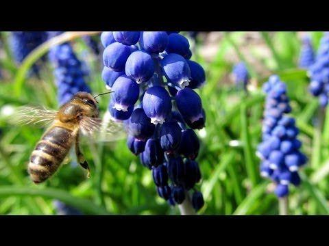 Wiosna w ogrodzie: Wiosenne kwiaty / Spring in the Garden: Spring Flowers - YouTube