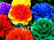 Wielka Wyprzedaż! 100 Rainbow Chryzantemy Nasiona Kwiatów Nasiona Paczkę, rzadko kolor, nowy przyjazd DIY Domu Ogród(China (Mainland))