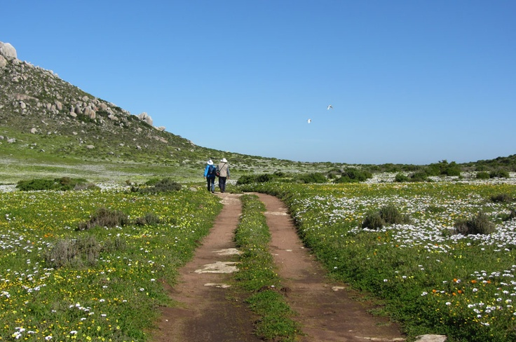 A couple walks down a lonely dirt road among thousands of spring flowers.
