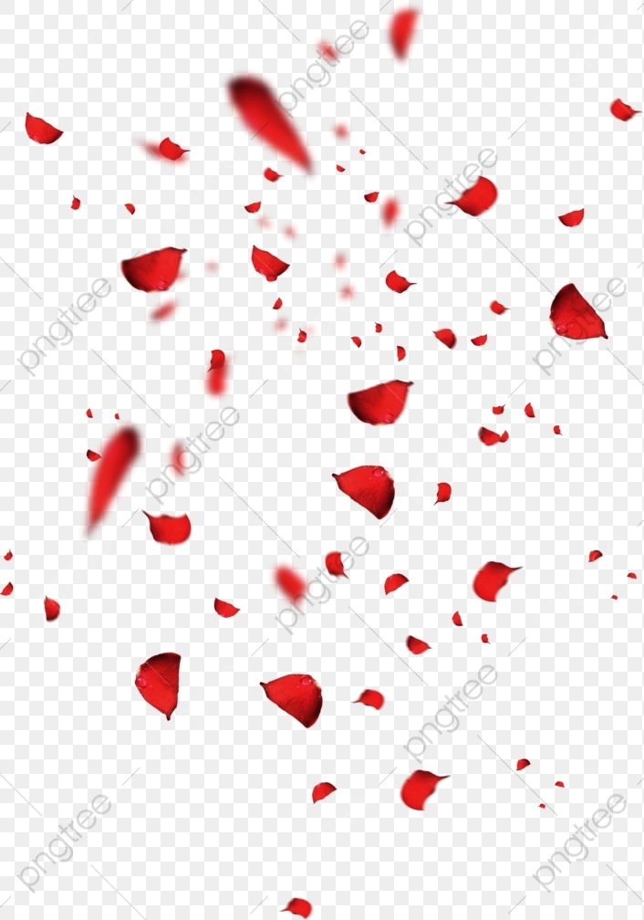 Red Petals Rose Petal Falling Petals Scattered Petals Png Transparent Clipart Image And Psd File For Free Download Rose Petals Falling Red Rose Petals Red Petals