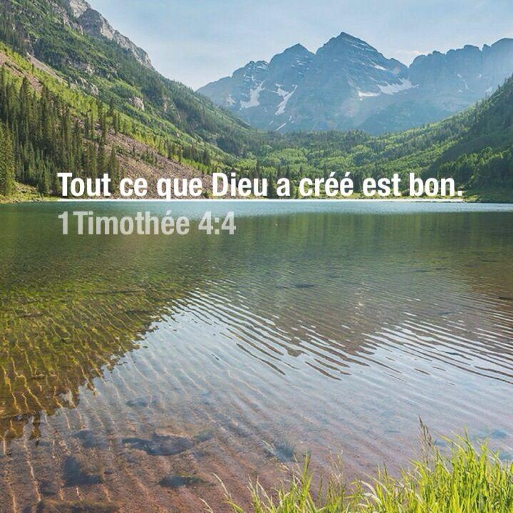 La Bible - Versets illustrés - 1 Timothée 4:4 - Tout ce que Dieu a créé est bon.