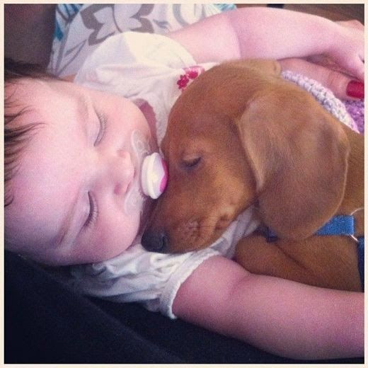 Sleeping Dogs Drinks Case