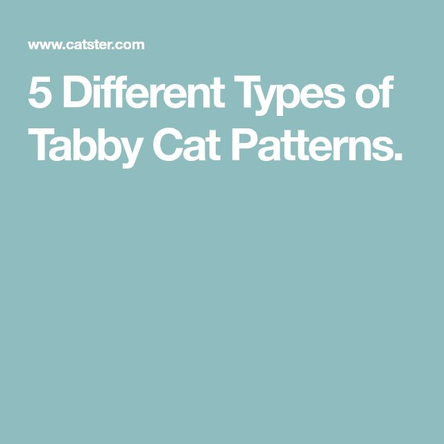 5 Different Types of Tabby Cat Patterns.