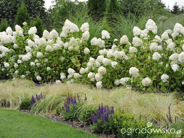 Po mojemu. Ogród subiektywnie świadomy. - strona 2 - Forum ogrodnicze - Ogrodowisko