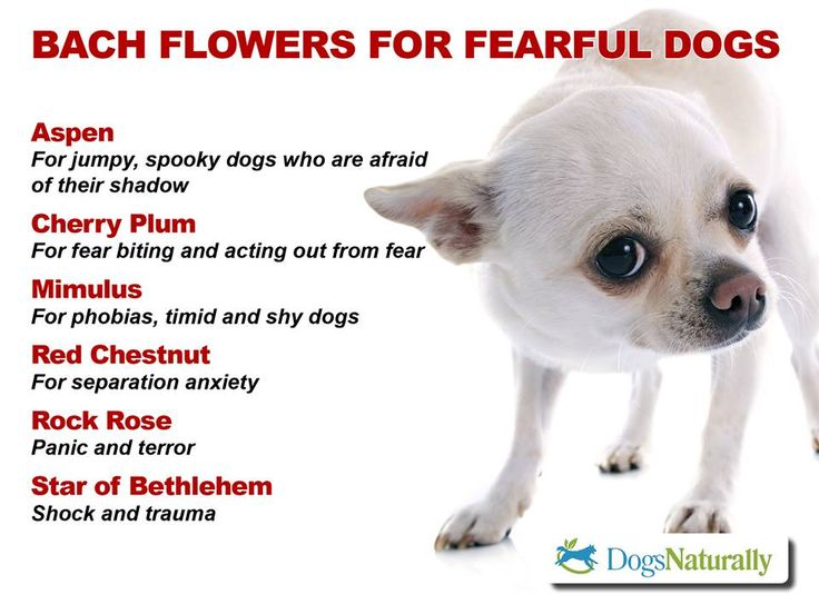 Bach flower remedies for dogs TOTALLY SAFE!