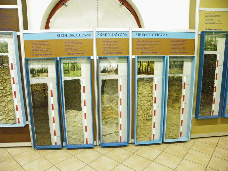 """Gołuchów Park - """"Powozownia""""- Muzeum Leśnictwa Rodzaje i przekroje gleby"""